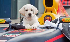 Celebrating the Year of the F1 Dog