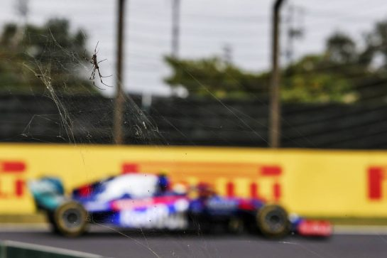 Naoki Yamamoto (JPN) Scuderia Toro Rosso STR14 passing a spider. 11.10.2019. Formula 1 World Championship, Rd 17, Japanese Grand Prix, Suzuka, Japan, Practice Day. - www.xpbimages.com, EMail: requests@xpbimages.com - copy of publication required for printed pictures. Every used picture is fee-liable. © Copyright: Moy / XPB Images
