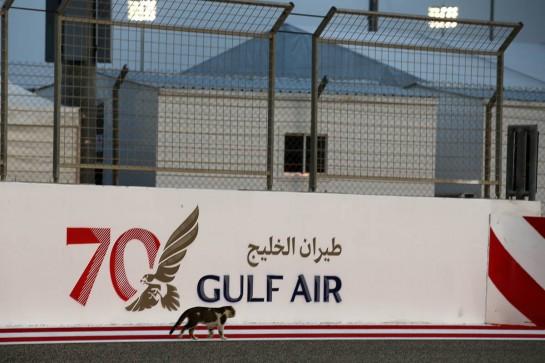 Circuit atmosphere - a cat. 29.11.2020. Formula 1 World Championship, Rd 15, Bahrain Grand Prix, Sakhir, Bahrain, Race Day. - www.xpbimages.com, EMail: requests@xpbimages.com © Copyright: Batchelor / XPB Images